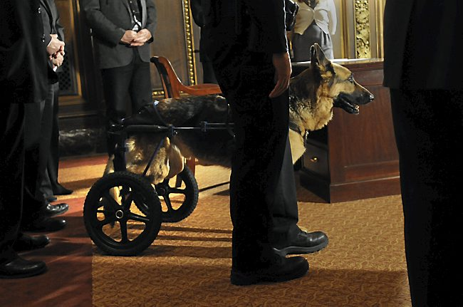 ctp police dog capitol