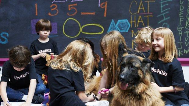 Pets_School_Dogs_r620x349