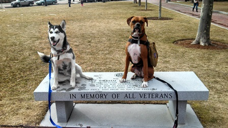 R-veterans-dog-3