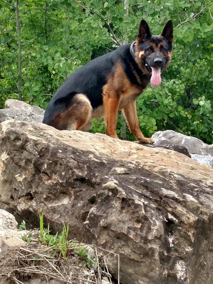 police-dog-drupal