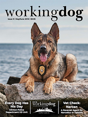 media-workingdog